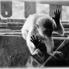 monkey-window-3